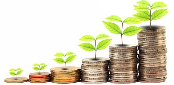 денежного дерева семена