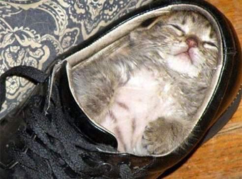 в ботинке кот